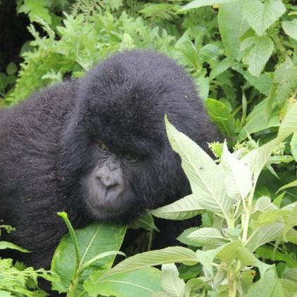 rwanda avril 2011 032
