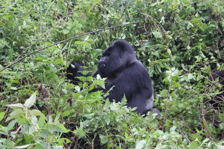 rwanda avril 2011 056