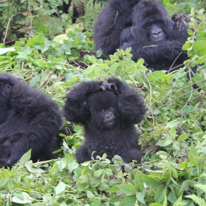 rwanda avril 2011 109