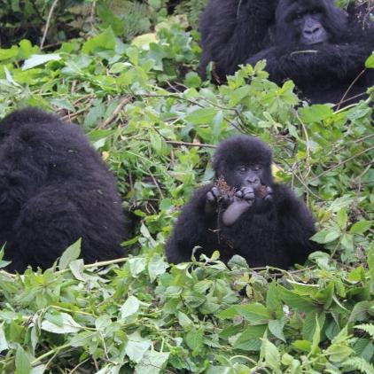 rwanda avril 2011 113