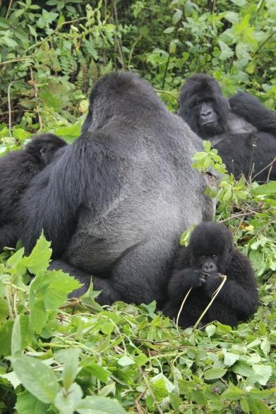rwanda avril 2011 177