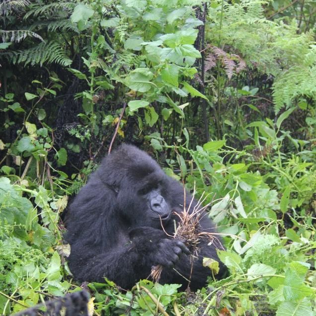 rwanda avril 2011 187