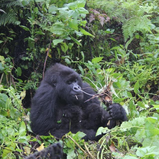 rwanda avril 2011 192