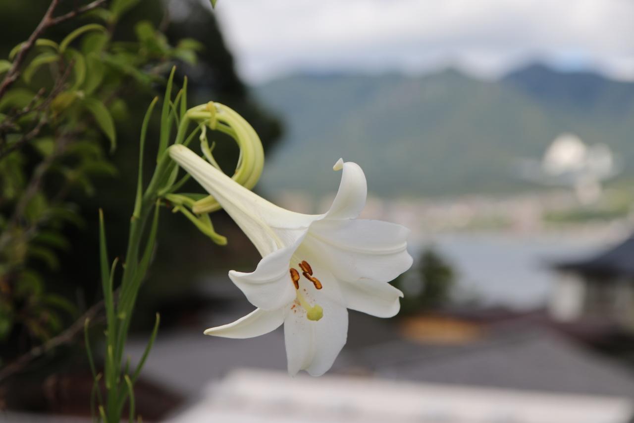 Miyajima et le temple deDaisho-In