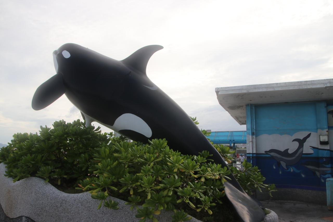 A la recherche des baleines sur la côte ouest de Taïwan – le Maryland taïwanais!