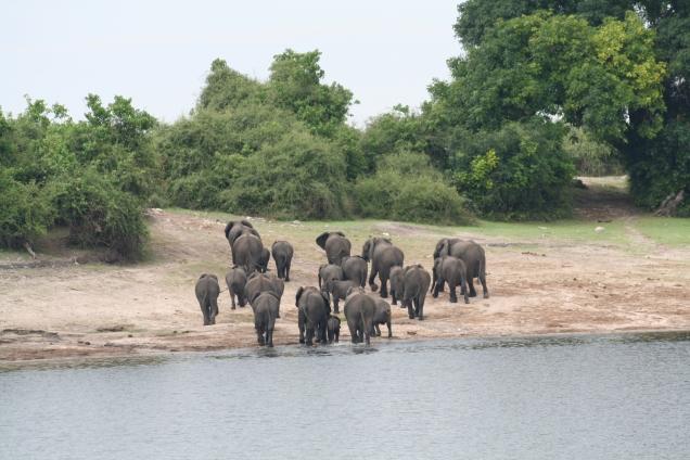 Botswana 3 chobe river et savute nov 2008 304