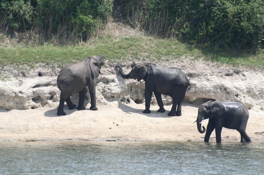 Botswana 3 chobe river et savute nov 2008 395