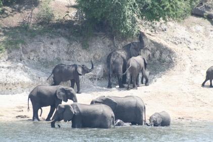 Botswana 3 chobe river et savute nov 2008 397