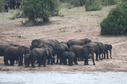 Botswana 3 chobe river et savute nov 2008 400