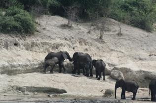Botswana 3 chobe river et savute nov 2008 406