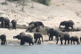 Botswana 3 chobe river et savute nov 2008 407