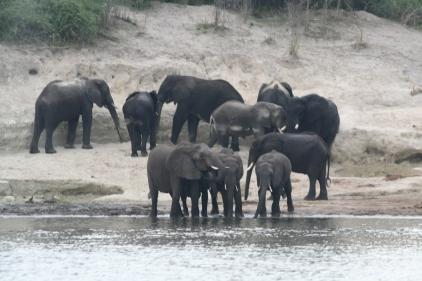 Botswana 3 chobe river et savute nov 2008 437