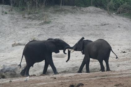 Botswana 3 chobe river et savute nov 2008 451