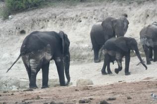 Botswana 3 chobe river et savute nov 2008 452