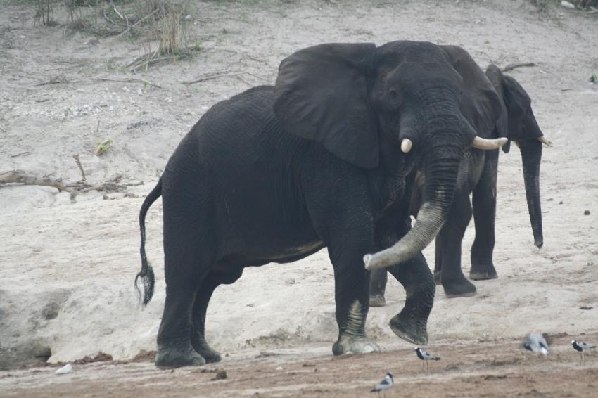 Botswana 3 chobe river et savute nov 2008 454
